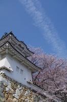 春の龍野城と桜