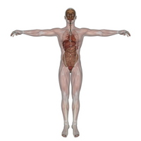 Male mannequin [1538800] Medical