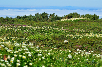 Mountain par of alpine flower garden and sea of clouds Stock photo [1542380] Plateau