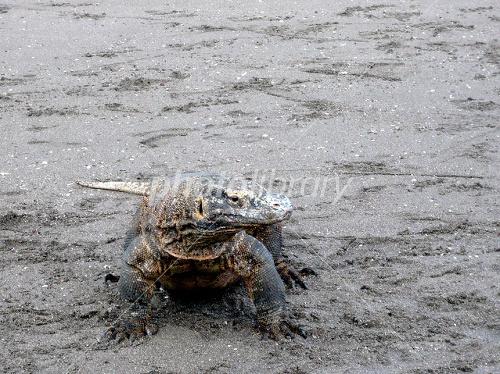 コモド国立公園の画像 p1_15