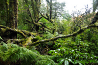 New Zealand forest Stock photo [1639781] New