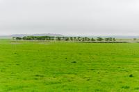 Grove of grassland Stock photo [1639989] Prairie