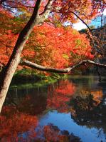 Autumn leaves reflected in special scenic spot-Koishikawa Korakuen pond Stock photo [1640772] Pool