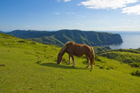 Horse of Matengai Stock photo [1641573] Matengai