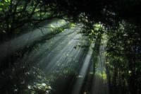 Forest Sunlight Stock photo [1644992] Mori