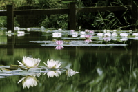 Pond of water lilies Stock photo [1649156] Water