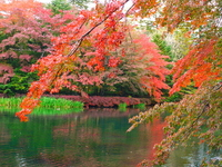 Autumn leaves of Kumo-jo pond Stock photo [1649409] Kumo-jo-chi