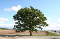 Seven star tree Stock photo [1740542] Seven