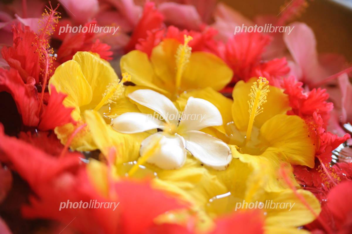 Frangipani and hibiscus flower basket Photo