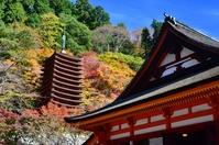 Nara Tanzan Shrine Akikei Stock photo [1813695] Nara