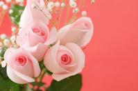 Rose Stock photo [1816607] Plant