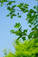 Cute leaves Stock photo [1820695] Fresh