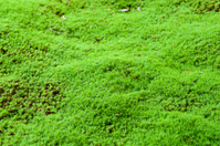 Moss of one side Stock photo [1822008] MOSS