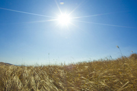Dried grass and shaft of light Stock photo [1823154] Prairie
