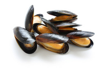 Mussels Stock photo [1924278] Mussels