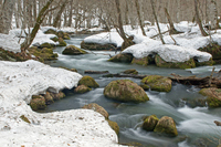 Oirase Stream of thaw Stock photo [1926236] Oirase