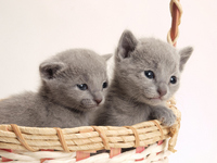 Two kittens Stock photo [1930610] Kitten