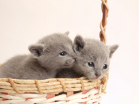 Two kittens that went into the basket Stock photo [1930621] Kitten