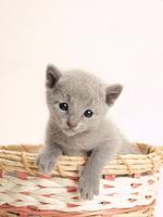 Kitten that went into the basket Stock photo [1933922] Kitten