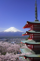 Mount Fuji with cherry blossom Stock photo [1935858] New