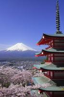 Mount Fuji with cherry blossom stock photo
