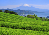 Landscape from Nihondaira Stock photo [1938321] Mt.