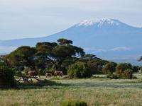 Kilimanjaro and African elephant Stock photo [1939052] Kilimanjaro