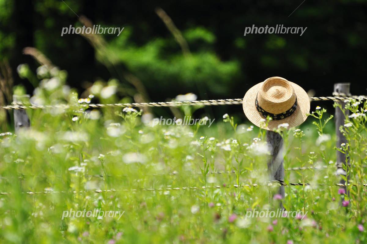 Summer Straw Hat Photo