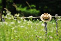 Summer Straw Hat Stock photo [2034644] Summer