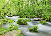 Fresh green Oirase Stream Stock photo [2036937] Oirase