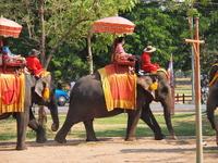 Elephant ride in Ayutthaya Stock photo [2039221] Thailand