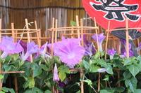 Morning glory Festival Stock photo [2039333] Festival