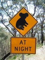 Labeling of Koala Stock photo [2039758] Signs