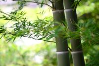 Bamboo Stock photo [2040324] Bamboo