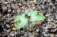 Bud of morning glory Stock photo [2041198] Morning