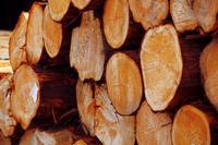Malta pile timber cypress Stock photo [2042167] Japanese