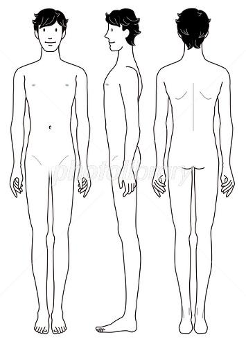 男性の身体 正面 横向 後姿 イラスト素材 2137562 フォトライブ