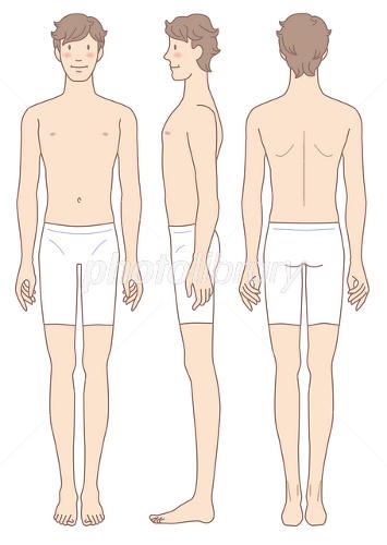 男性の身体 正面 横向 後姿 イラスト素材 2137590 フォトライブ