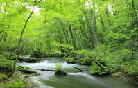 Fresh green Oirase Stream Stock photo [2132881] Oirase