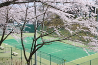 Sakura and a tennis court Stock photo [2143136] Sakura