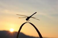 Autumn scene? Dusk of red dragonfly? Stock photo [2144407] Autumn