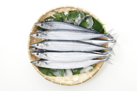 New saury taken in the bird's-eye view Stock photo [2145963] Pike