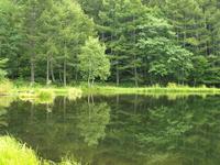 Mishaka pond Stock photo [2146077] Tateshina
