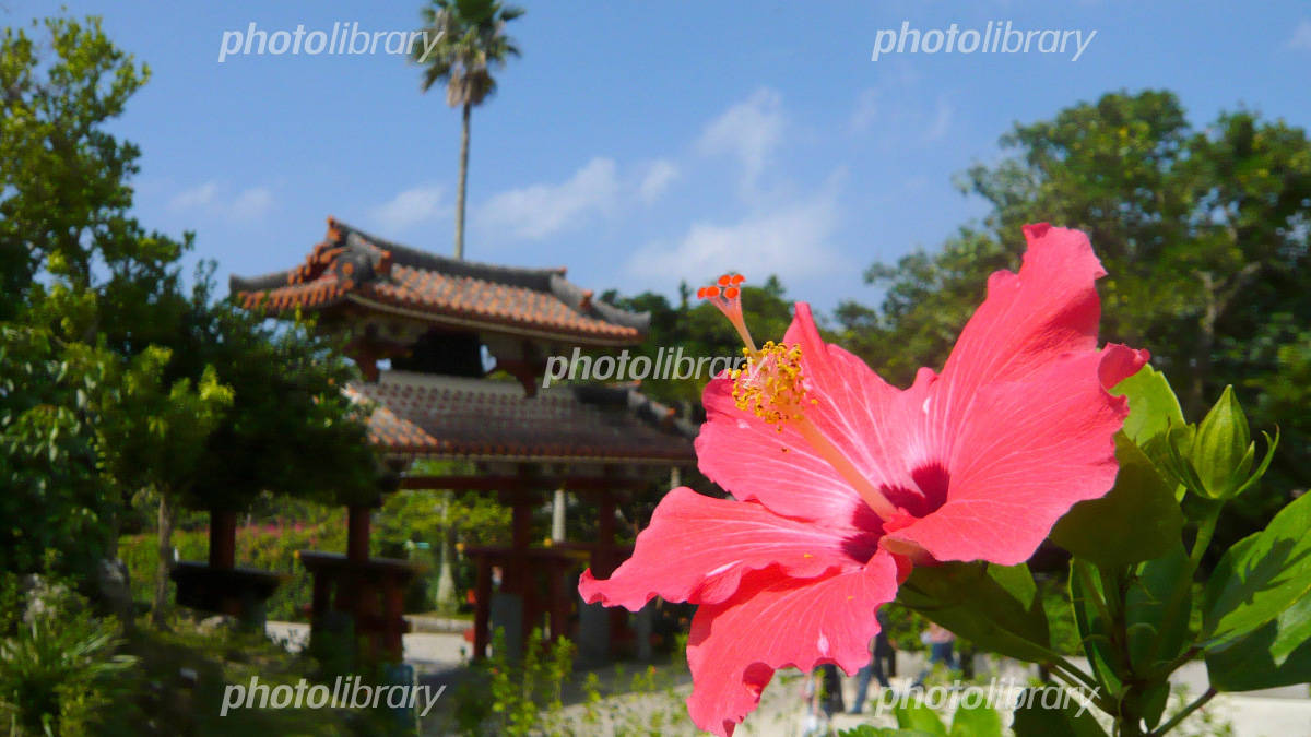 Hibiscus and Shureimon Photo