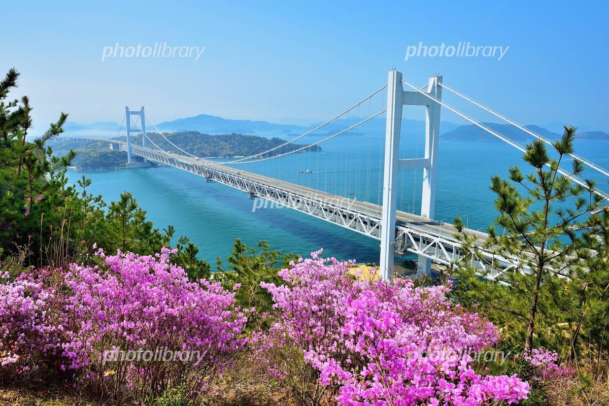Spring Seto Photo