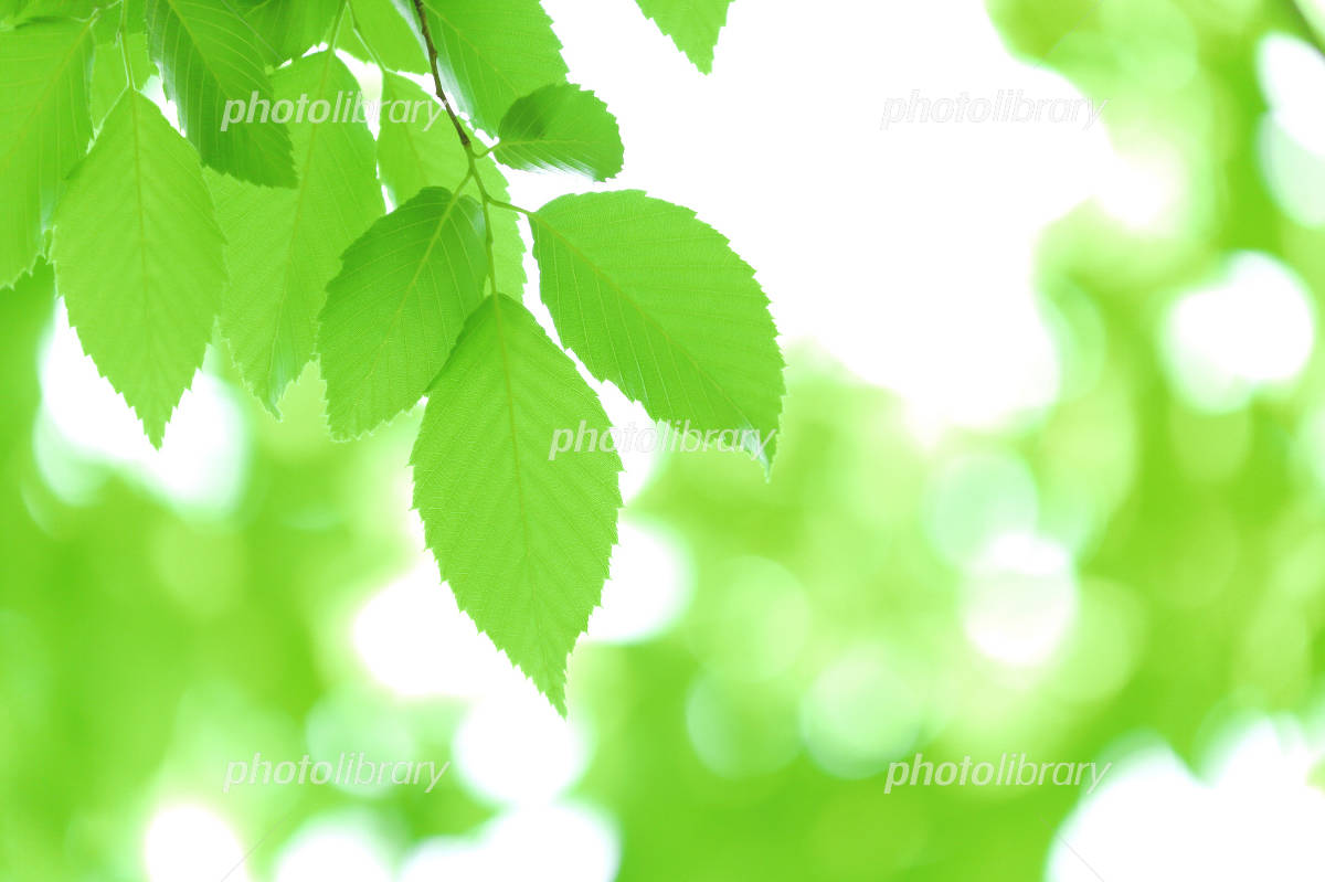 Fresh green Photo