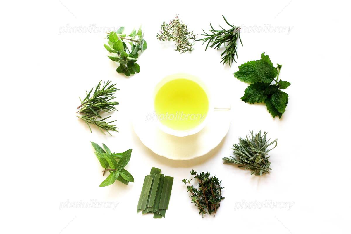 Herbal tea and fresh herbs Photo