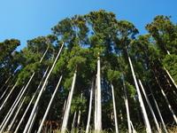 Cypress forests Stock photo [2248878] Tokushima