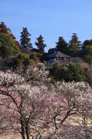 No person wants to distant Miume season Kairakuen Yoshifumi bower Stock photo [2251975] Kairakuen