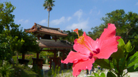 Hibiscus and Shureimon Stock photo [2252413] Hibiscus